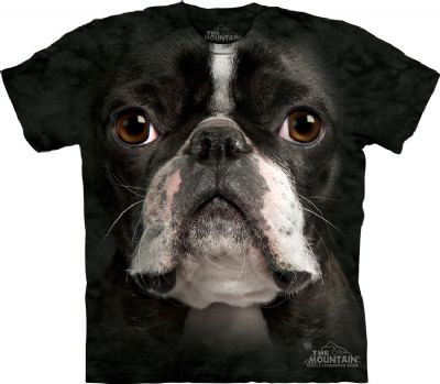 Boston_Terrier_Face_amp