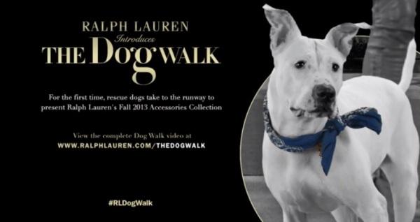 the dog walk