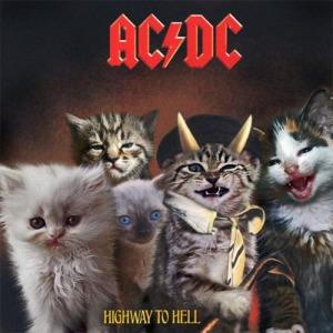 ACDC-Gato